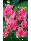 Тюльпан Торонто (Tulipa Toronto)