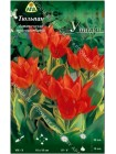 Тюльпан Уникум (Tulipa praestans Unicum)