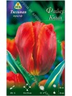 Тюльпан Файер Квин (Tulipa Fire Queen)