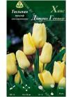 Тюльпан Ханс Дитрих Геншер (Tulipa Hans Dietrich Genscher)