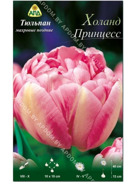 Тюльпан Холанд Принцесс