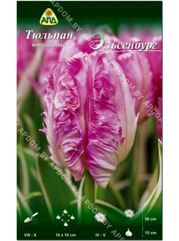 Тюльпан Эльсенбург (Tulipa Elsenburg)