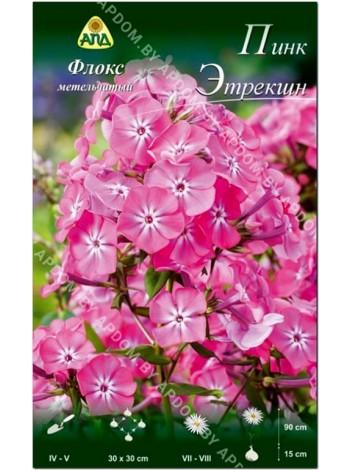 Флокс метельчатый Пинк Этрекшн (Phlox paniculata Pink Attraction)