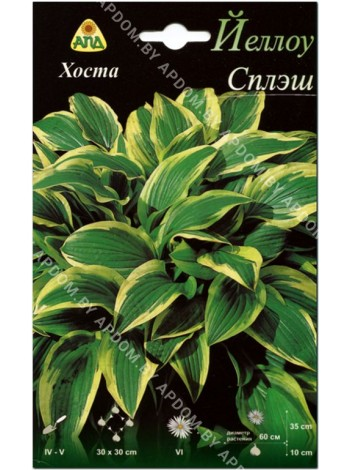 Хоста Йеллоу Сплэш (Hosta Yellow Splash Rim)