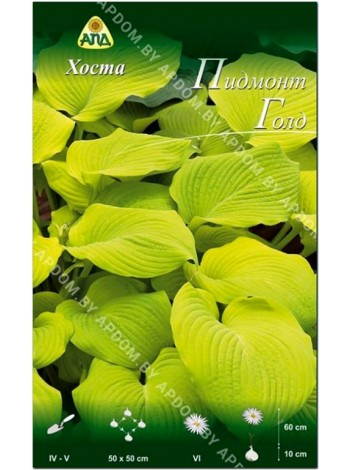Хоста Пидмонт Голд (Hosta Piedmont Gold)