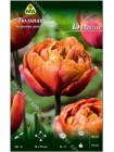 Тюльпан Брауни (Tulipa Brownie)