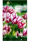 Тюльпан Флеминг Клаб (Tulipa Flaming Club)