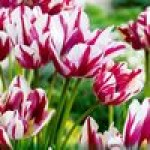 Цветы для осенней посадки
