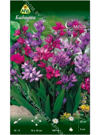 Бабиана (Babiana Kew hybrids mix)