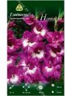 Гладиолус Натасья (Gladiolus Natasja)