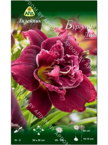 Лилейник Бургунди Лав (Hemerocallis Burgundy Love)