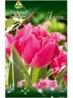 Тюльпан Даллас (Tulipa Dallas)