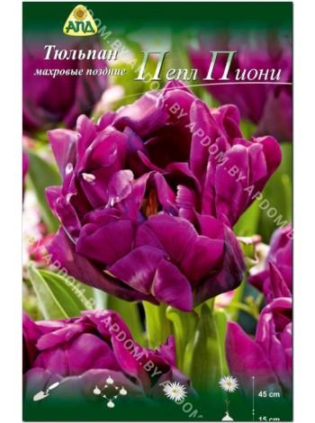 Тюльпан Пепл Пиони (Tulipa Purple Peony)