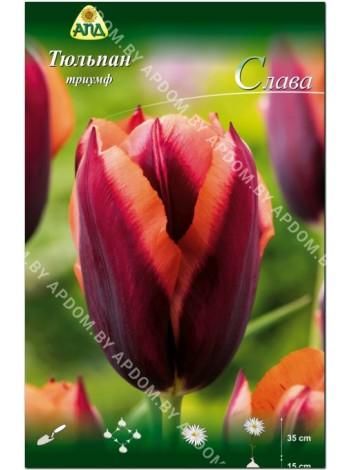 Тюльпан Слава (Tulipa Slawa)