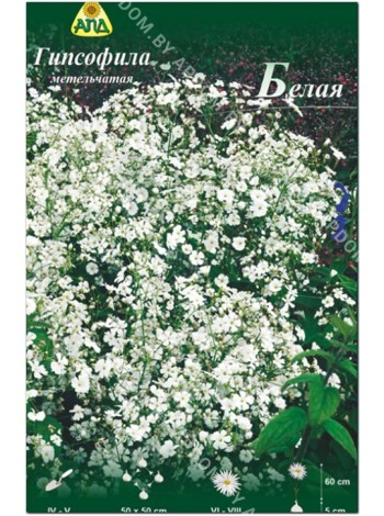 Гипсофила метельчатая Белая (Gypsophilla paniculata)