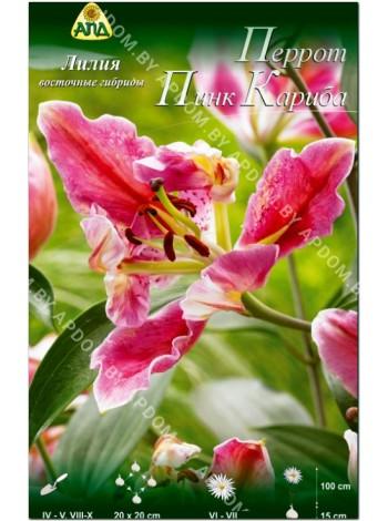 Лилия Перрот Пинк Кариба (Lilium oriental Parrot Pink Cariba)