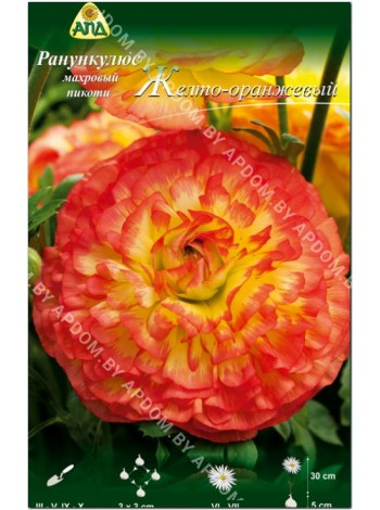Ранункулюс желто-оранжевый пикоти (Ranunculus asiatic picotee)