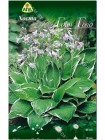 Хоста Грин Голд (Hosta Green Gold)