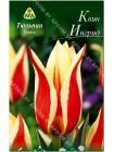 Тюльпан Квин Ингрид (Tulipa Queen Ingrid)