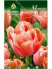 Тюльпан Ментон Экзотик (Tulipa Menton Exotic)