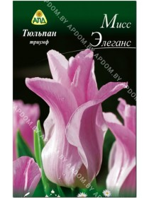 Тюльпан Мисс Элеганс