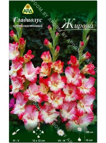 Гладиолус Жирона (Gladiolus Gerona)