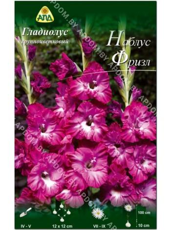 Гладиолус Наблус Фризл (Gladiolus Nablus Frizzle)