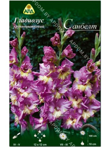 Гладиолус Санбелт (Gladiolus Sunbelt)
