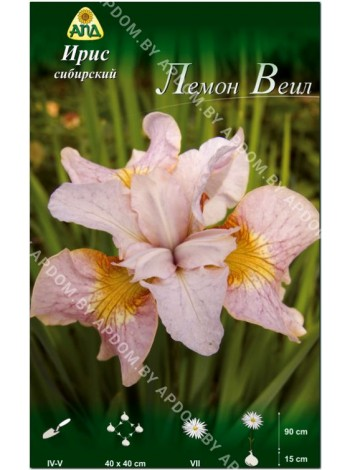 Ирис сибирский Лемон Веил (Iris sibirica Lemon Veil)