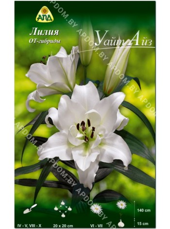 Лилия Уайт Айз (Lilium OT White Eyes)