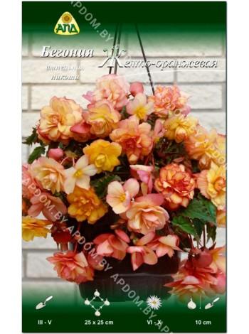 Бегония ампельная пикоти Желто-оранжевая (Begonia Hanging Basket pendula picotee)