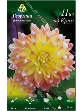 Георгина Пич энд Крим (Dahlia Peaches and Cream)