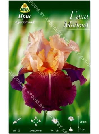 Ирис германский Гала Мадрид (Iris germanica Gala Madrid)
