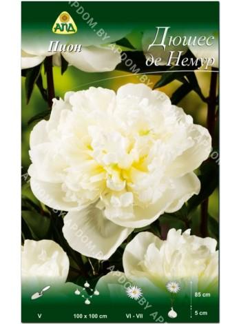 Пион Дюшес де Немур (Paeonia lactiflora Duchesse de Nemours)