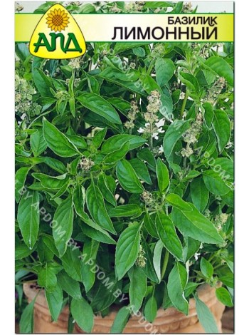 Базилик лимонный (Ocimum basilicum L.)