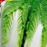Семена китайской капусты