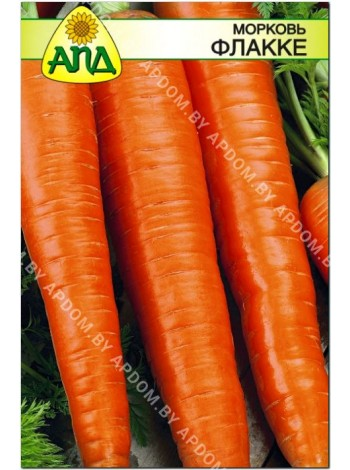 Морковь Флакке (Daucus carota L.)