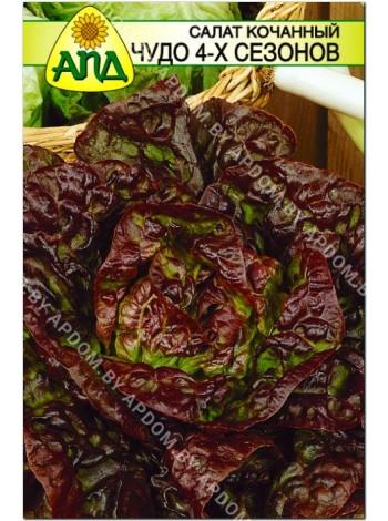 Салат кочанный Чудо 4-х сезонов (Lactuca sativa L.var.capitata)