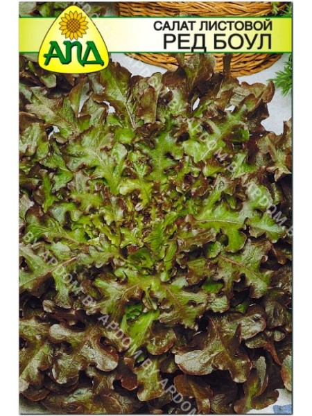 Салат листовой Ред Боул