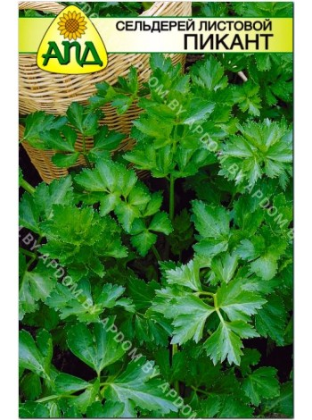Сельдерей листовой Пикант (Apium graveolens L.var.secalinum)