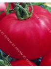 Томат Буги-Вуги F1 (Lycopersicon esculentum)