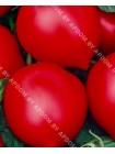 Томат Хали-гали F1 (Lycopersicon esculentum)