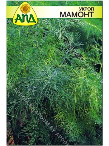 Укроп Мамонт (Anethum graveolens L.)