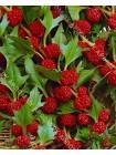 Шпинат земляничный (Chenopodium foliosum)