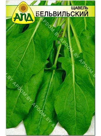 Щавель Бельвильский (Rumex acetosa L.)