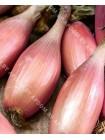 Лук репчатый Тропеана Лонг (Allium cepa)