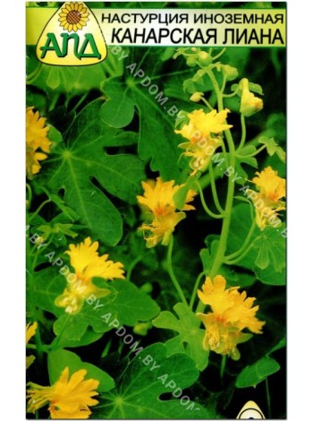 Настурция иноземная Канарская Лиана (Tropaeolum peregrinum)