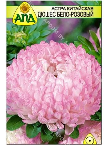 Астра китайская Дюшес бело-розовый (Callistephus chinensis)