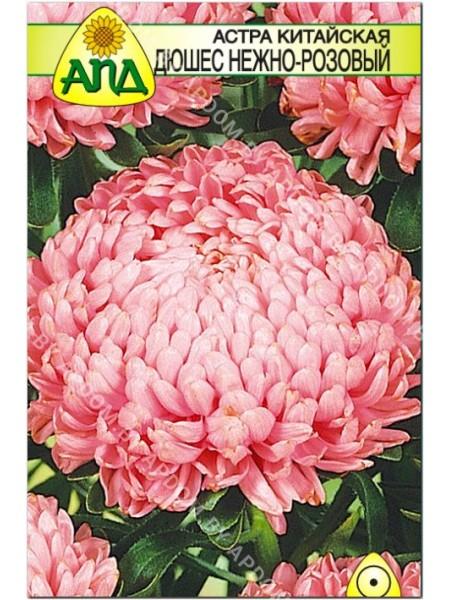 Астра китайская Дюшес нежно-розовый