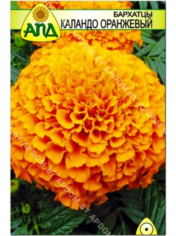 Бархатцы Каландо оранжевый (Tagetes erecta nana)